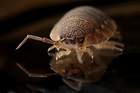 How Do You Get Rid of Bedbugs Permanently - Key Tips