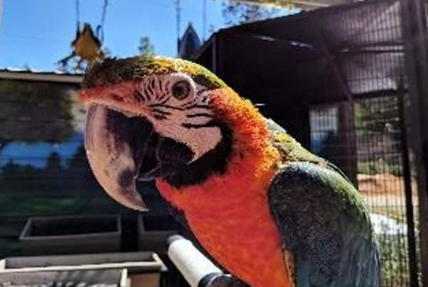 Exotic bird sanctuary