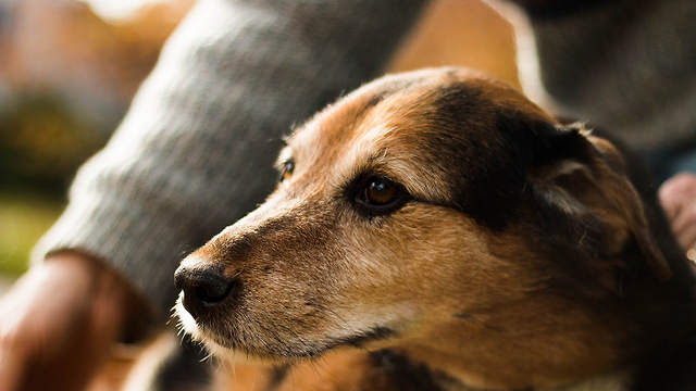 Emotional support animals can also have a positive impact on an individual's physical health.