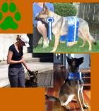 Dog Trainer, Luzelle, Of Solution K9 Dog Training New Plymouth, NZ Launches New Website