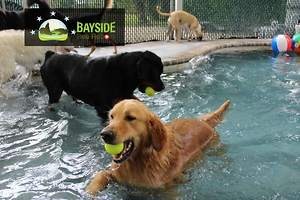 New Doggie Swimming and Wading Pool a Big Splash at Sarasota Bayside Pet Resort