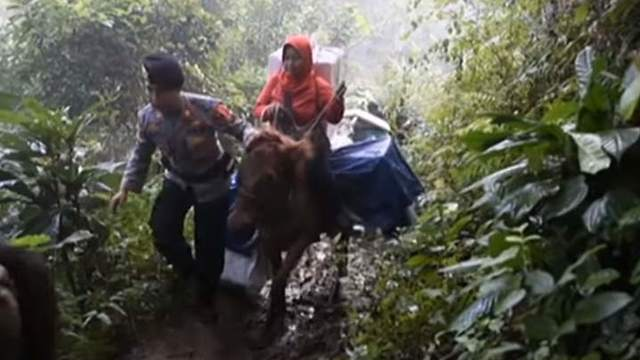Ballots were transported on donkeys through the jungle from remote villages.