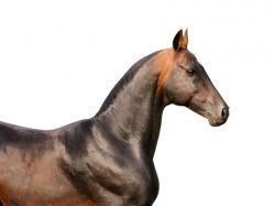 Natural Horse Supplements Provide an Alternative to Synthetic Pharmaceuticals