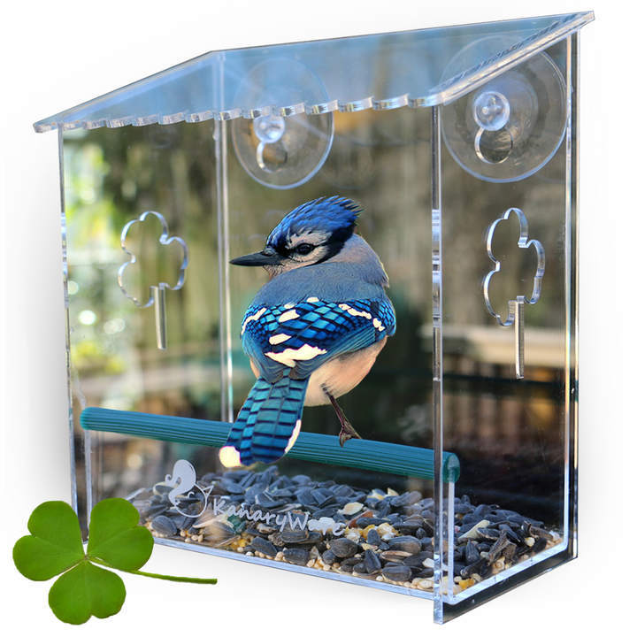 Window Bird Feeder to Enjoy Wild Birds up Close