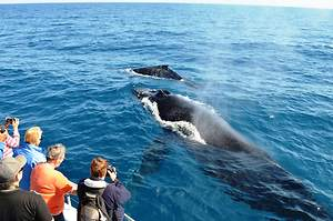 Why Should You Take Your Kid for Whale Watching?