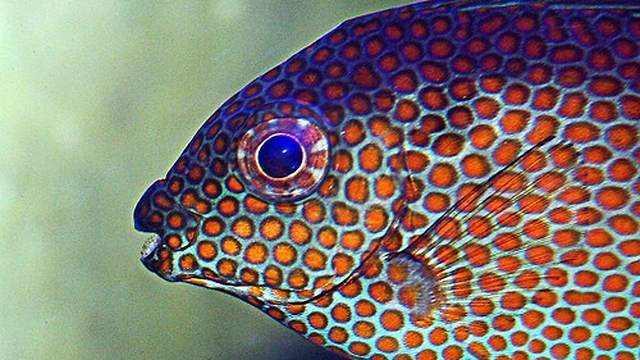 Pet fish for sale on saltwater and freshwater fish choices for Salt water fish pets