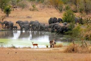 Safaris in South Africa Ranked Among the World's Best