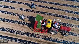 Transplanter, the Value of Automation: Wolf Planter