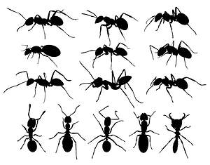 4 Awesome Tips to Get Rid of Carpenter Ants