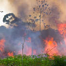 Rain forest on fire